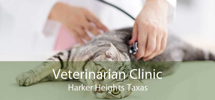 Veterinarian Clinic Harker Heights Taxas