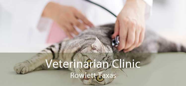 Veterinarian Clinic Rowlett Taxas